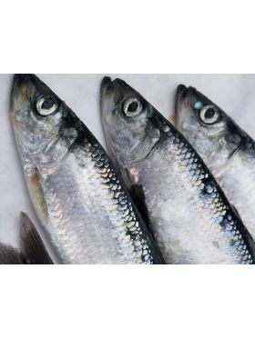 Whole Pacific Herring